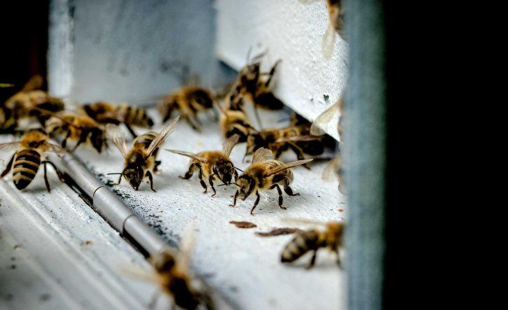alergija na pčele i ose