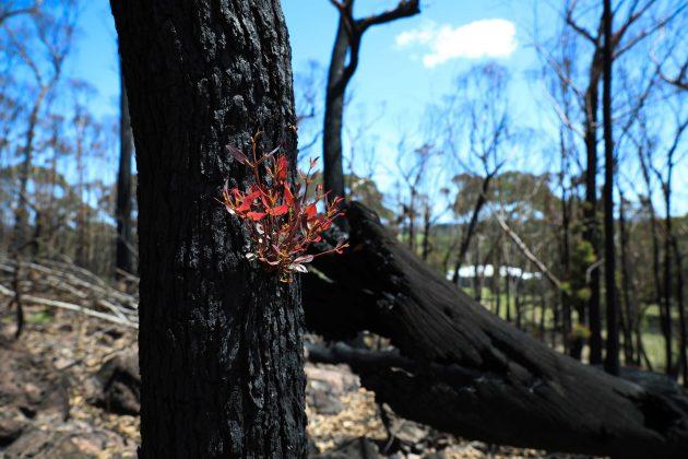 Šuma u Australiji