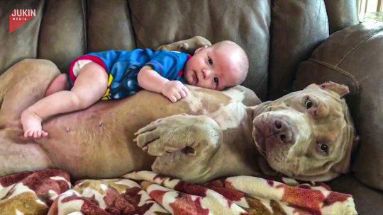opasan pas i beba ljubav