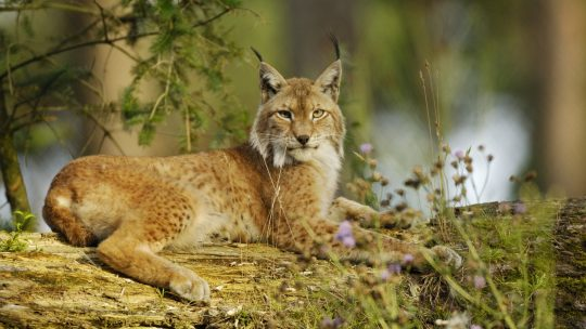 retke životinje u Srbiji