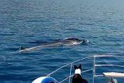 Šolta kit