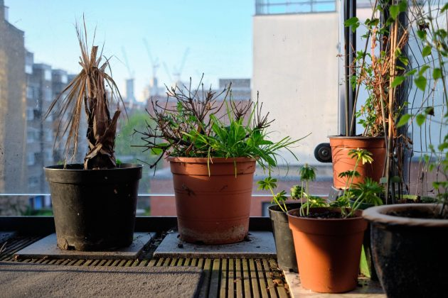 Uvele biljke