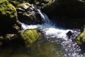 Ušće reke Bistrice u Vlasinu