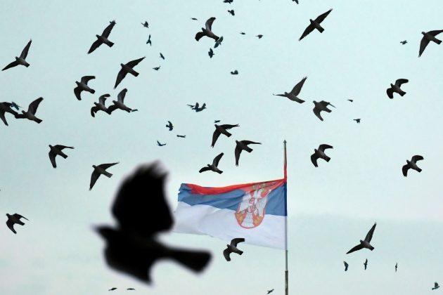 Ptice lete kao lude oko Palate Srbija