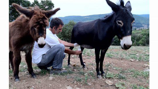 magareće mleko