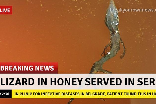 gušter u medu