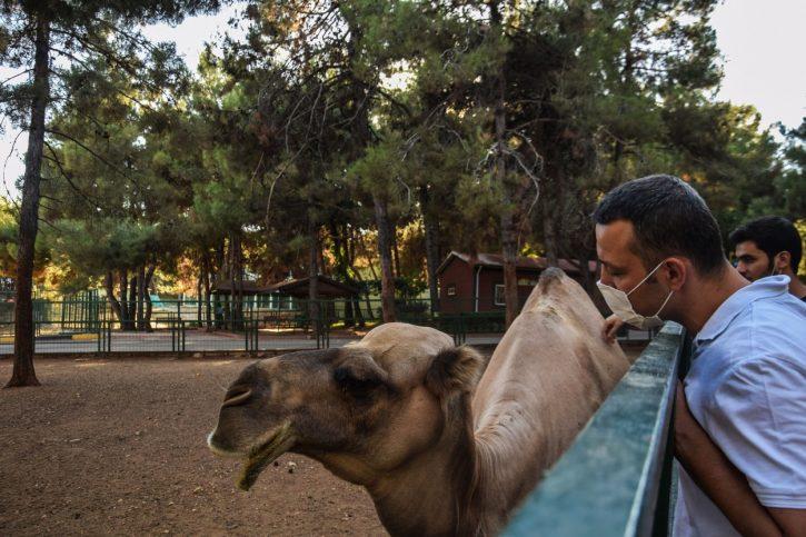 ukrao kamilu