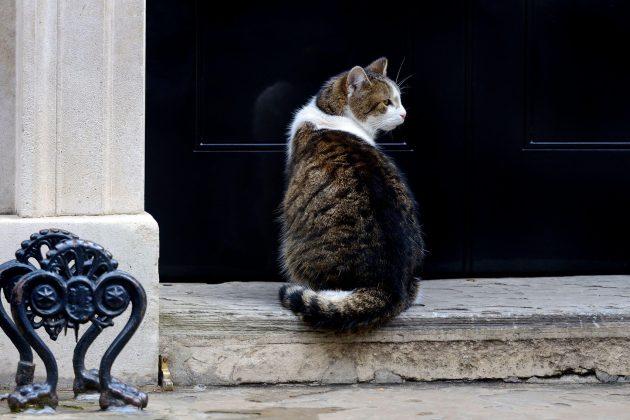 mačka dauning strit