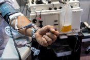 transfuzija; doniranje plazme