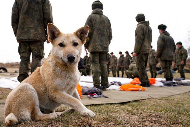 Rusija, vojni pas