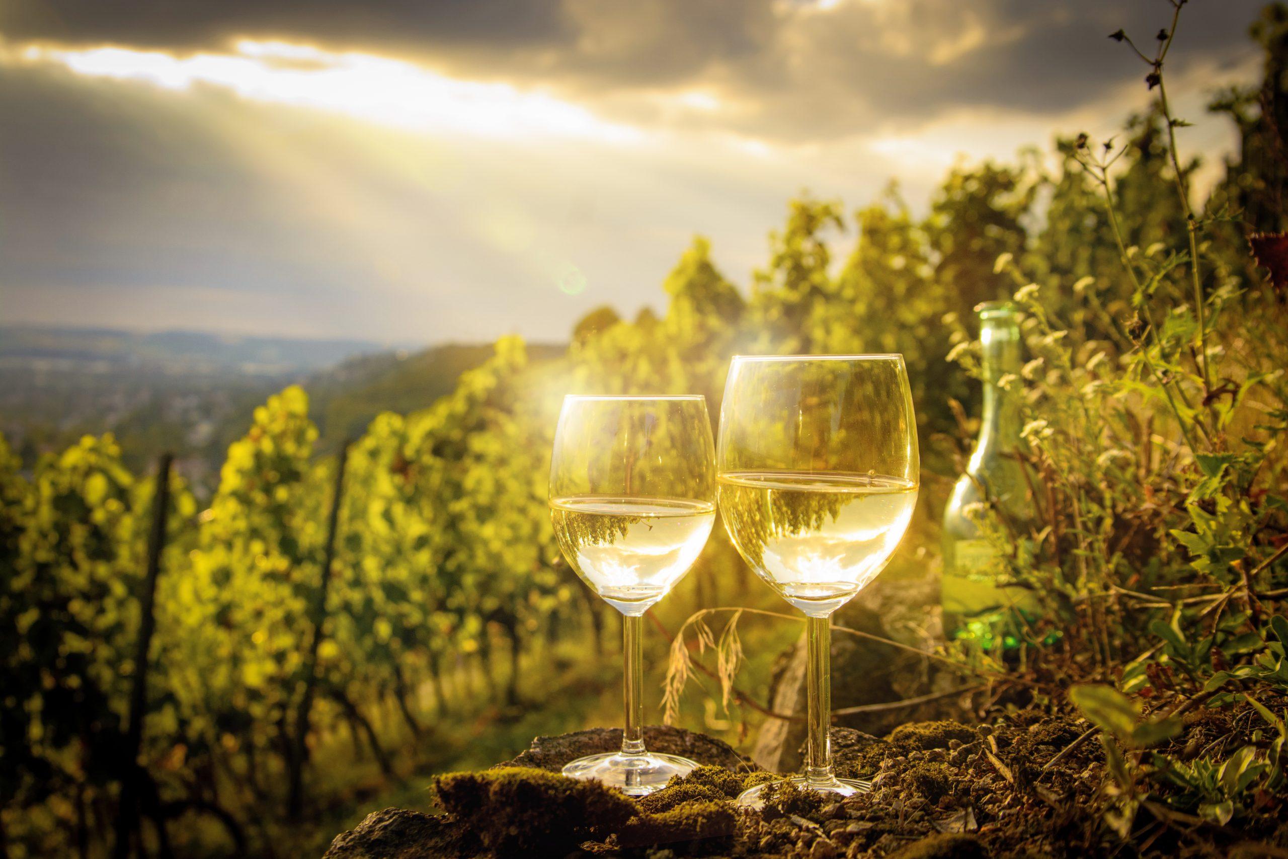 Vinograd, vino