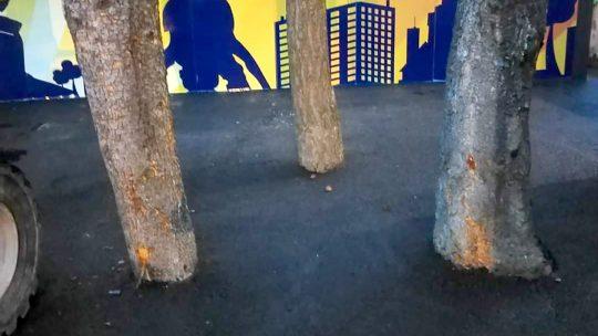 Betonirano drvece
