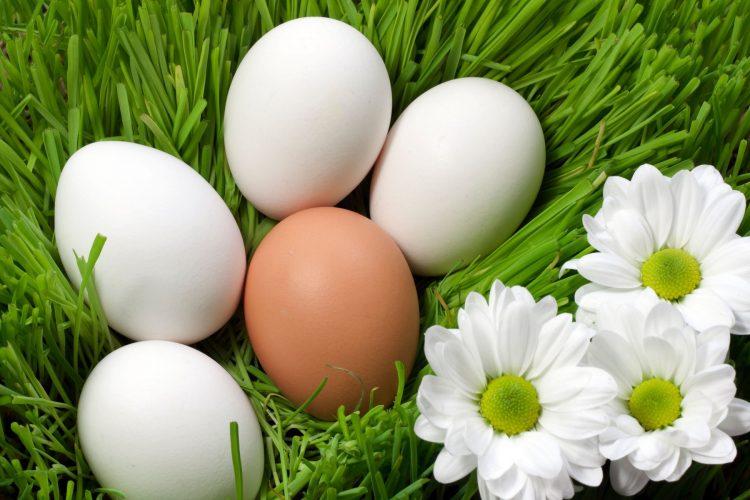 jaja; izbeljivanje jaja