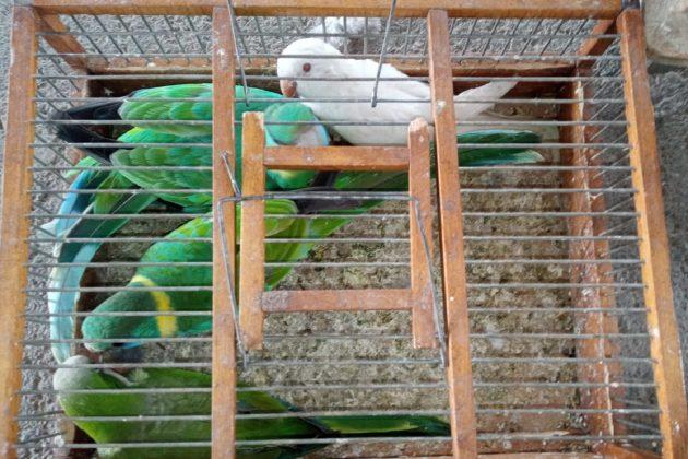 krijmučarenje ptica, ptice