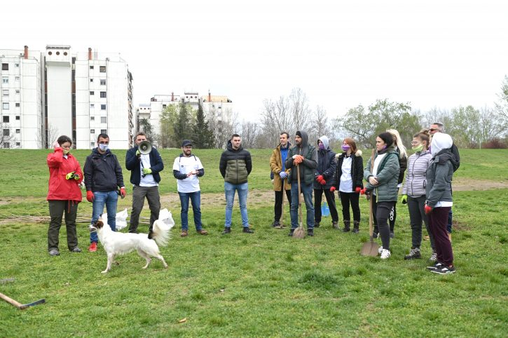 Novi Beograd, ozelenjavanje, sbb
