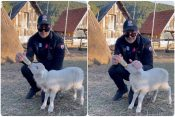 Milos Bikovic jagnje