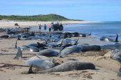 Delfini, mrtvi delfini