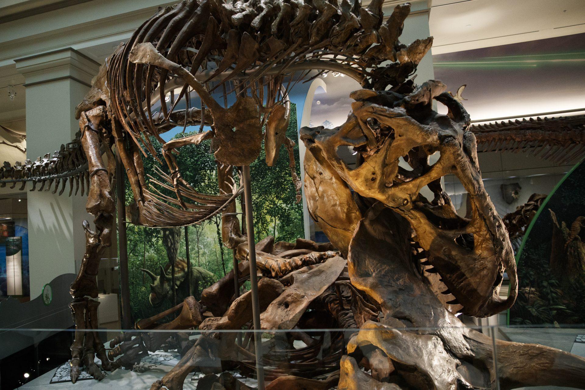 Tiranosaurus Reks