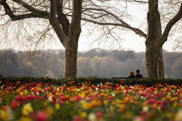 vremenska prognoza; proleće; cveće; park; par