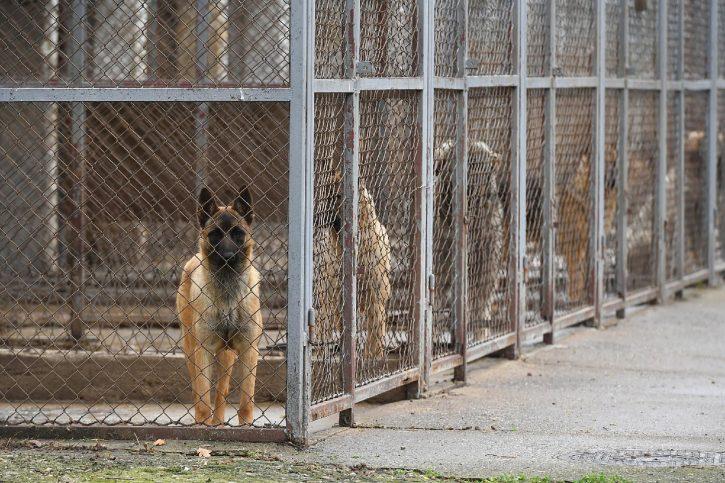 Policijski psi