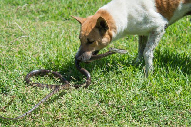 Pas i zmija