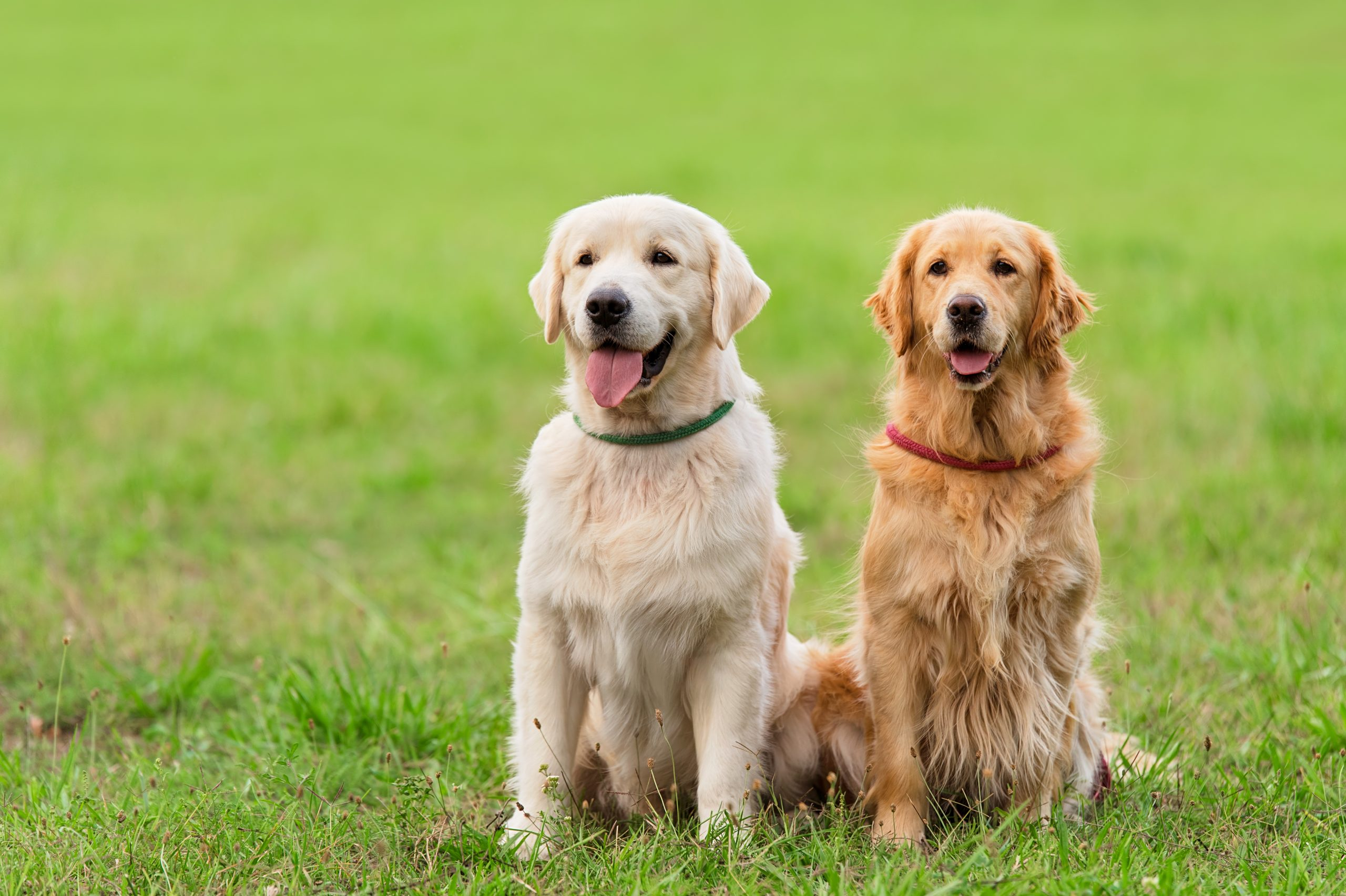 Par, psi, dva psa