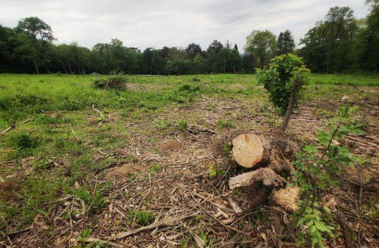 Kostunjak suma drvo drvece seca stabala seca sume ekologija zivotna sredina
