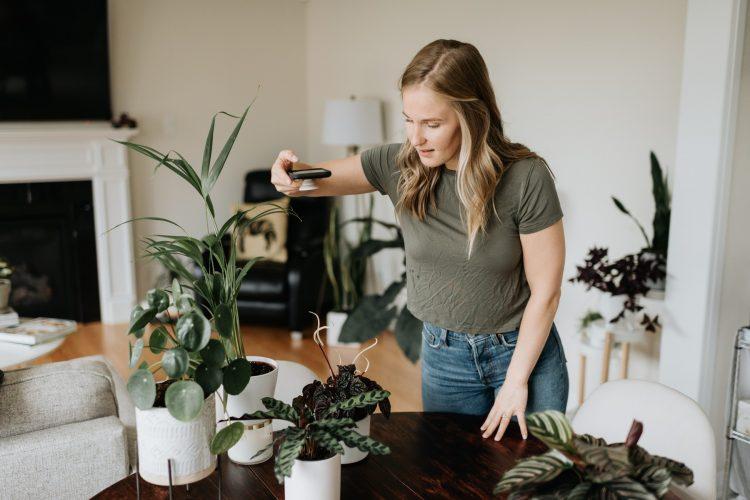 nega biljaka