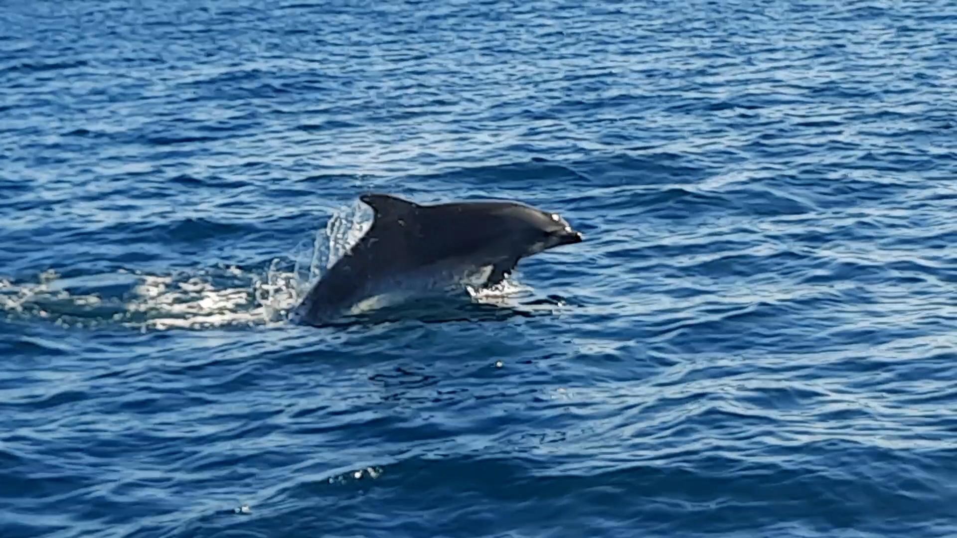 Delfin u Boki Kotorskoj