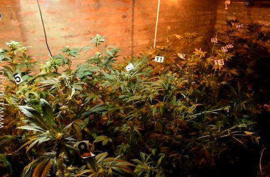 Laboratorija Marihuane