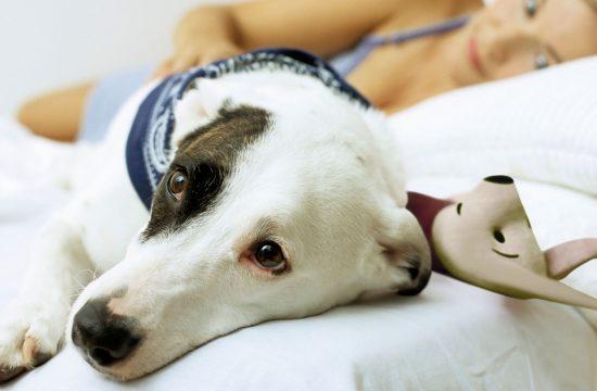 veterinar bolestan pas