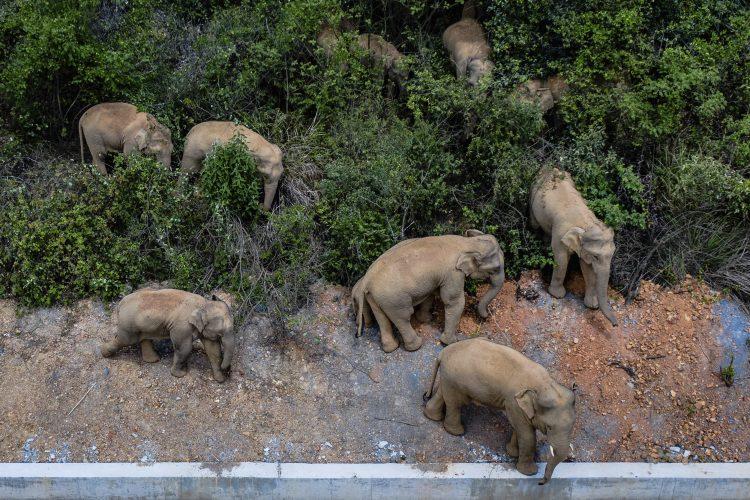 Slonovi Kina