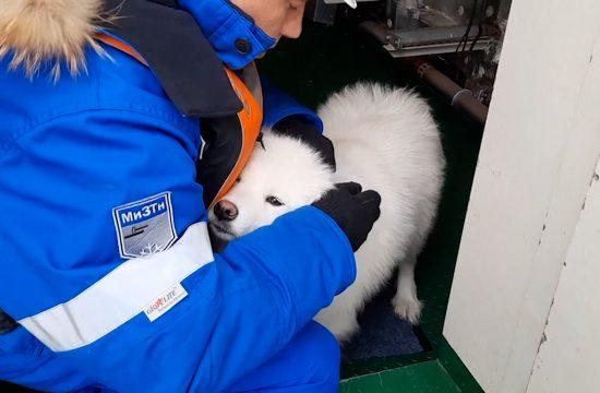 pas sibir ledolomac spasavanje