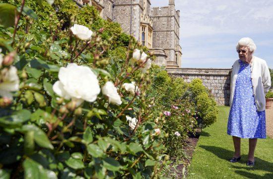 Kraljica Elizabeta, ruža, vojvoda od Edinburga