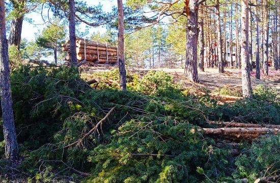 Zlatibor, Zlatiborski okrug, seča šuma, pošumljavanje