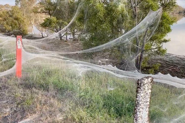 Australija, paukova mreža, paukove mreže