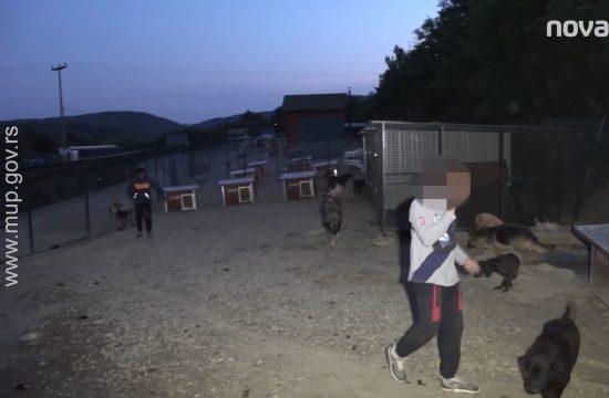 Kragujevac, prihvatilište, azil za pse, vlasnik mučio životinje, mučitelj životinja, pasa, hapšenje