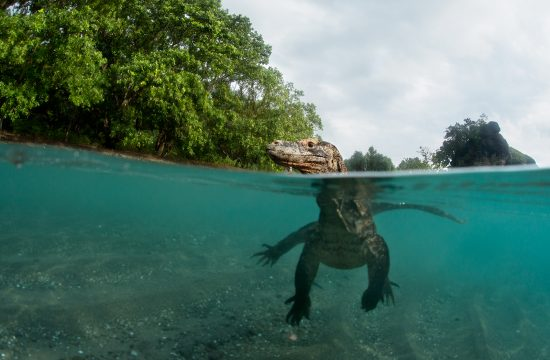 Nacionalni park Komodo
