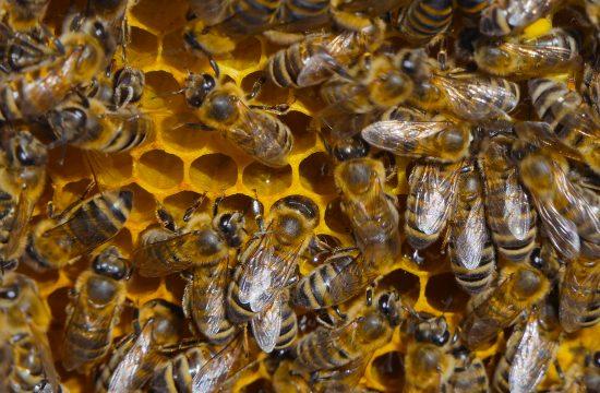 Šorti Najskuplji Med