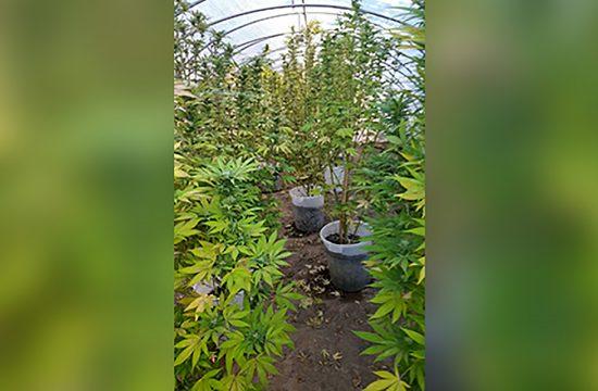 Jagodina marihuana laboratorija