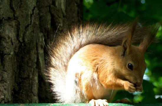 Veverice priroda park suma