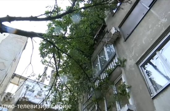 Palo drvo, ulica vojvode Dobrnjca