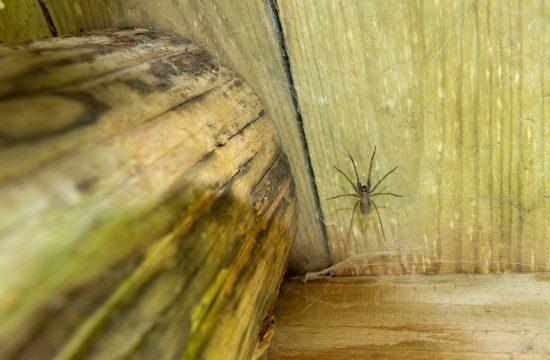 Paukova mreža, paučina, pauk